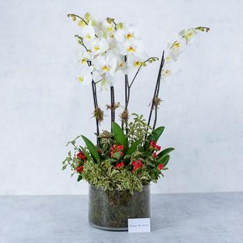 Orchid Garden I