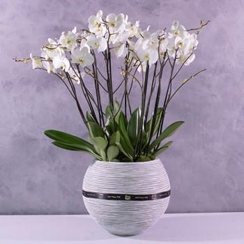 Orchids Bowl 1