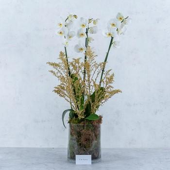 Flower Beauty 170