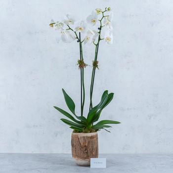 Flower Beauty 210