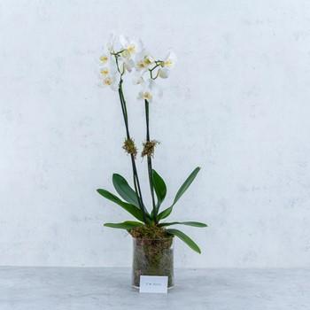 Flower Beauty 230