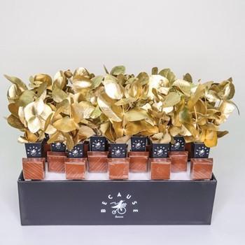 Golden Grace Giveaway II
