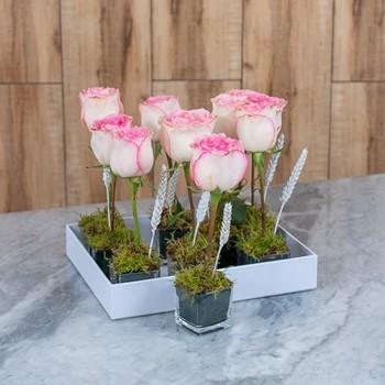 Pink Rose I