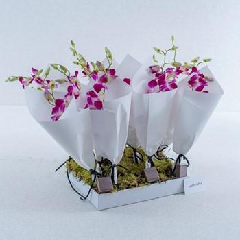 Fuchsia Sweet I