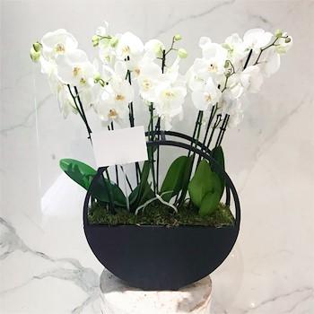 Le Grand Orchids 1