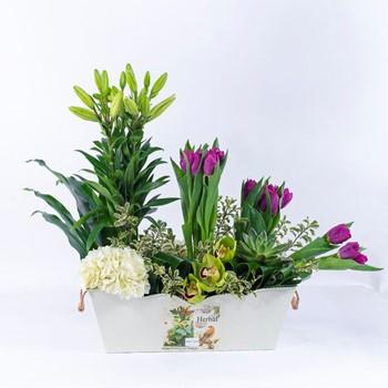 Iron Box Flowers 1