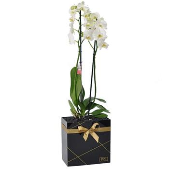 Black Acrylic Orchid