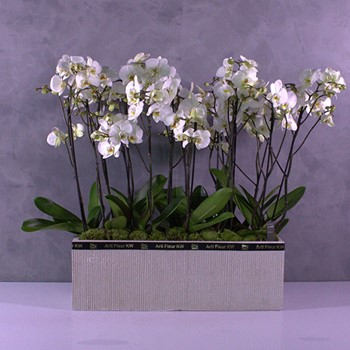 Orchids Container