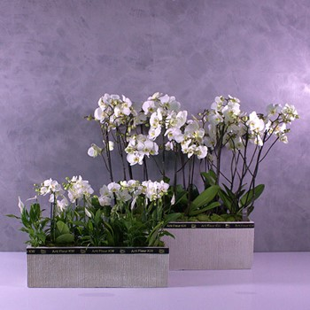 Orchids Container 2