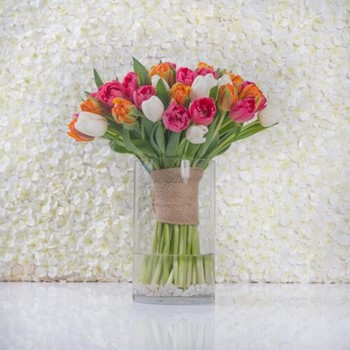 Tulipops