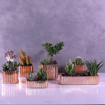 Cactus Set 6