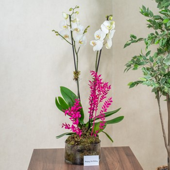 Show Orchid