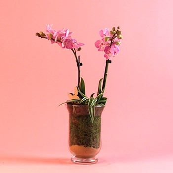 Orchid Jar Exotic