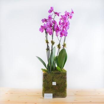 Flirty Purple Orchids II