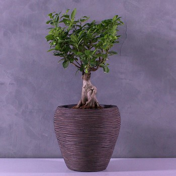 Happy Bonsai 2