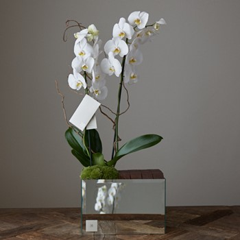 Orchid & Choco