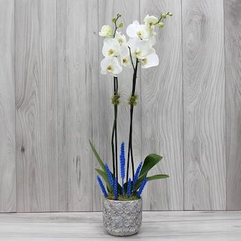 Blue Light Ceramic