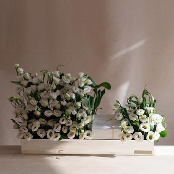 20 Purely White