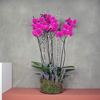 Round Pink Lavender