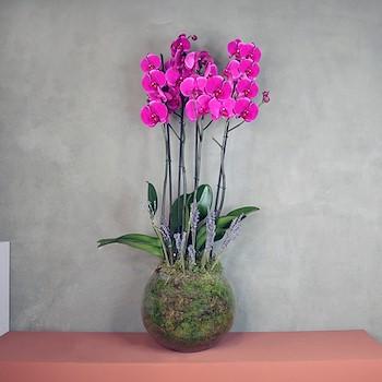 Pink Lavender Bowl