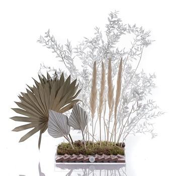 Natural Palm II