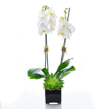 Floristry Dream II