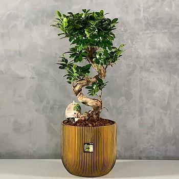 Gold Bonsai