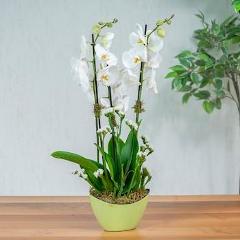 Mint Iris I