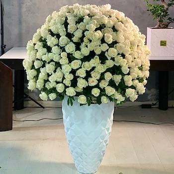 400 White Roses