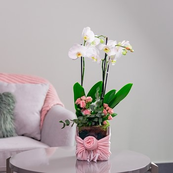 My Orchid Pink 1