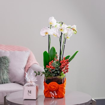 My Orchid Orange 2
