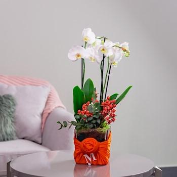 My Orchid Orange 1