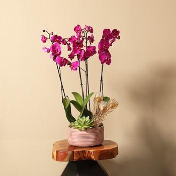 15% OFF - Small Echeveria Pink