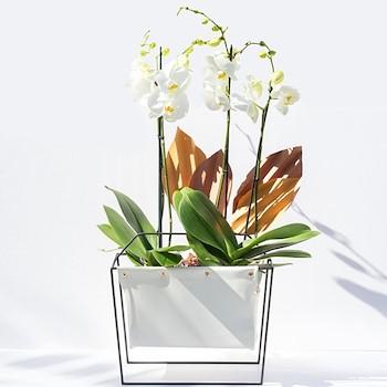 Orchids Calm Large