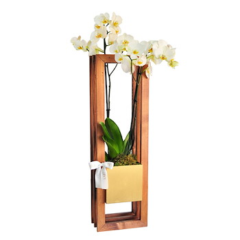 Wood Stand Orchid