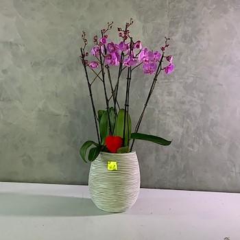 Purple & White 2