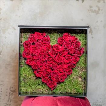 Amore V