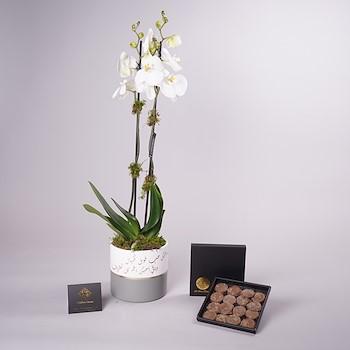 Single Orchid vase