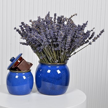 Royal Blue Lavender