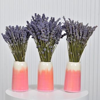 Triple Purple