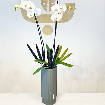Bathra Orchids 2