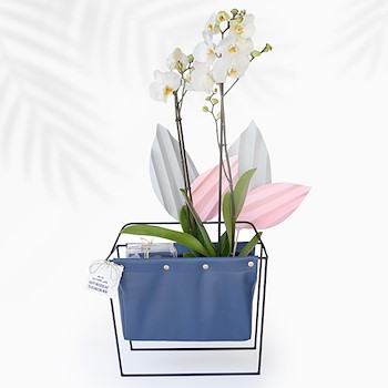 Orchids Faith (Large Cup)