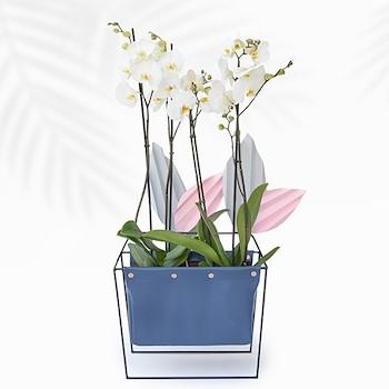 Orchid Faith Large