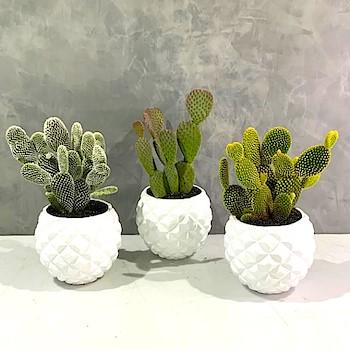 Cactus Deluxe 3