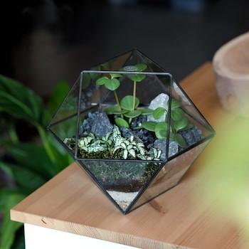 Round Geometric Terrarium