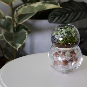 Chocolate Bubble Terrarium