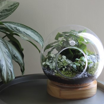Light Wood Terrarium