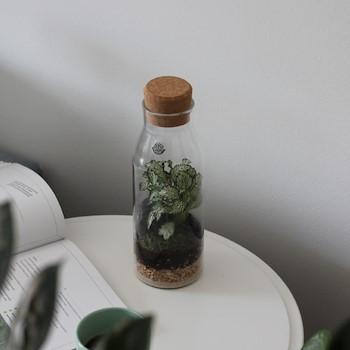 Bottle Terrarium