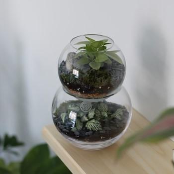 Small Double Terrarium
