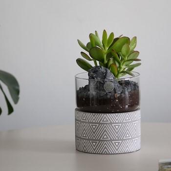 Concrete Pot Jade